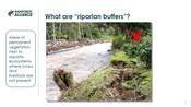 6.3 Riparian buffers