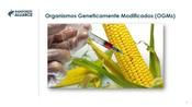PT - 4.3 GMOs