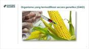 ID - 4.3 GMOs